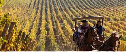 Holidays in Chile's Wine Country