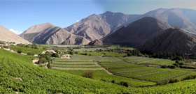 Photos of Chilean Wine Country