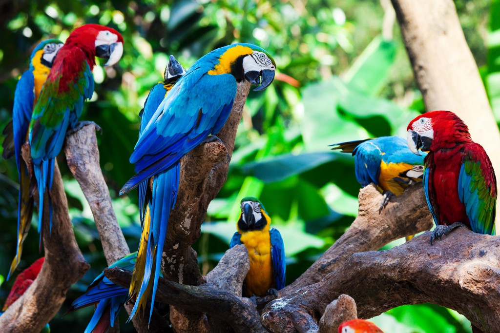 Parrots, RealWorld, Sights worth getting up for in South America