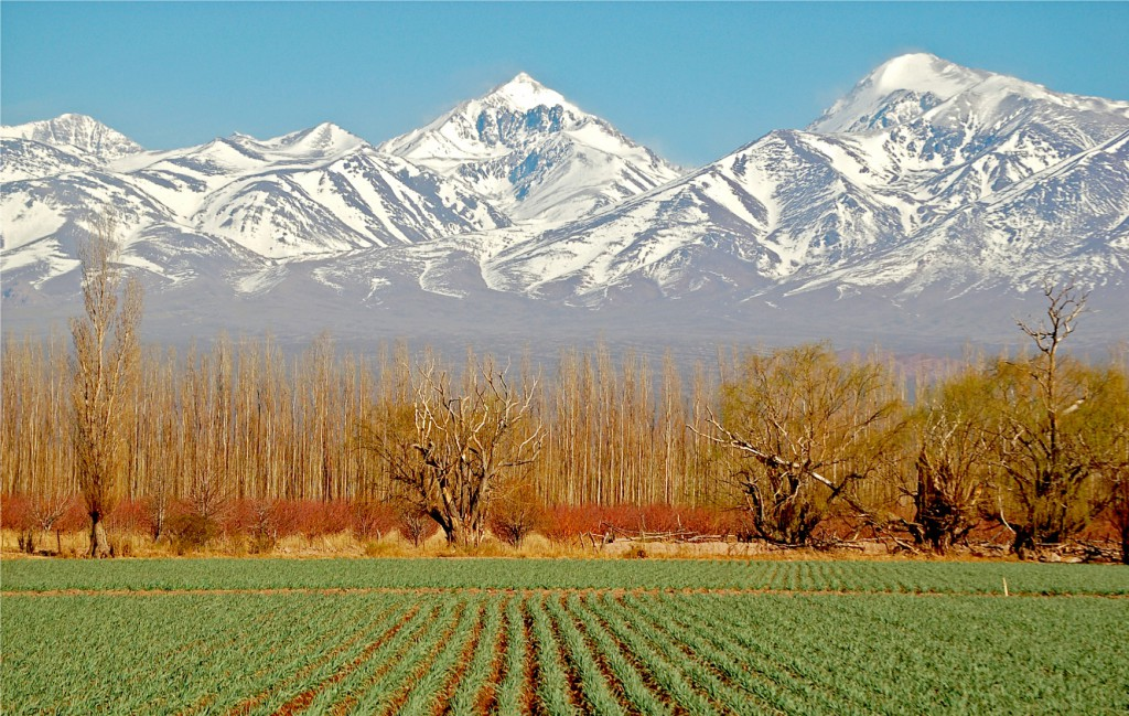 mendoza-vines-mountains, RealWorld, South American wines