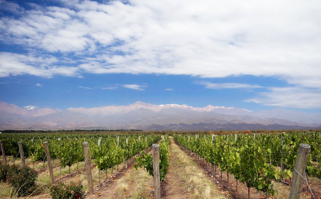 mendoza-vines-mountains-2, RealWorld, South American wines