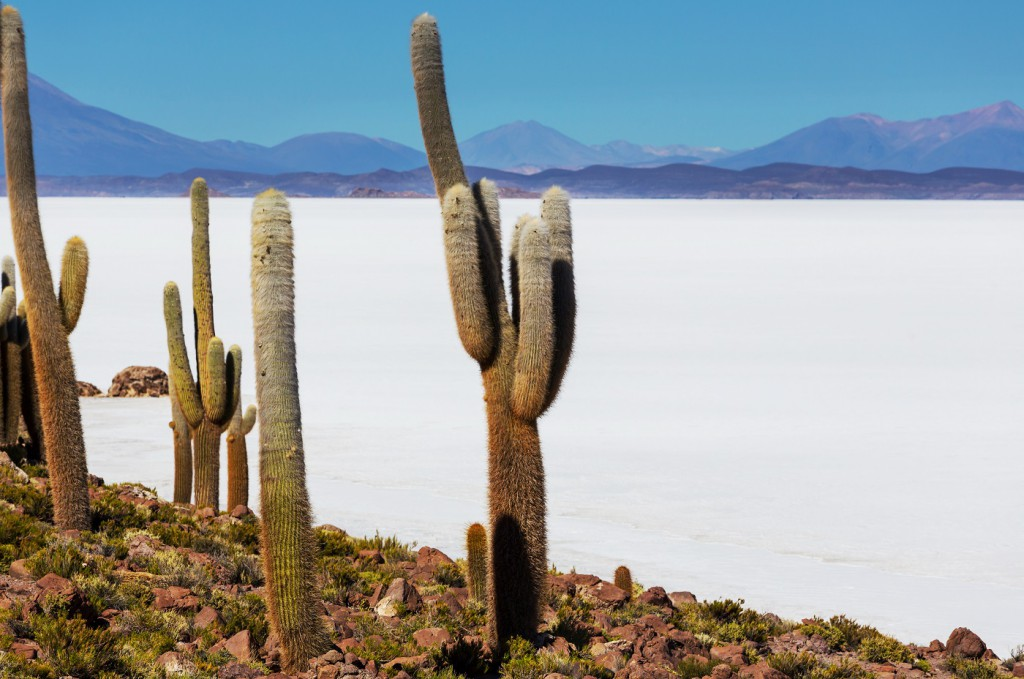 Isla Pescado, routes to Uyuni, RealWords