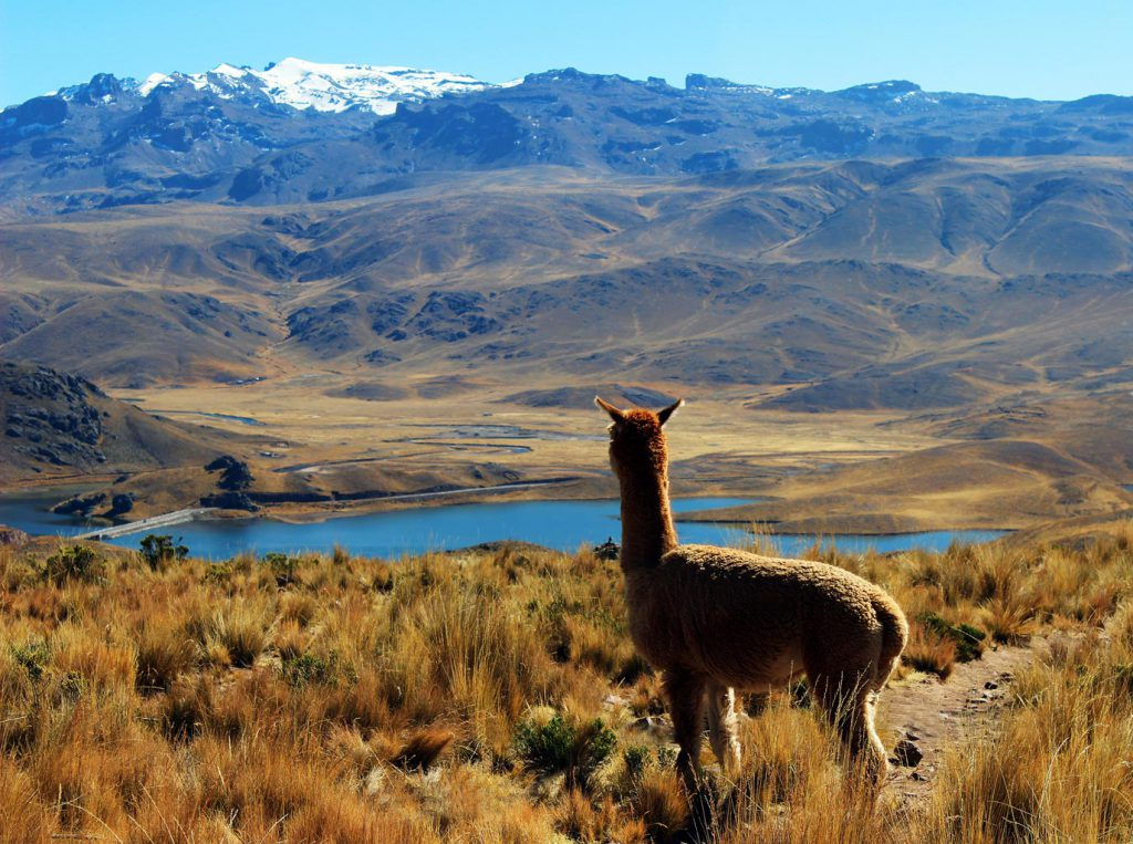 RealWorld Holidays - Things you didn't know about llamas!