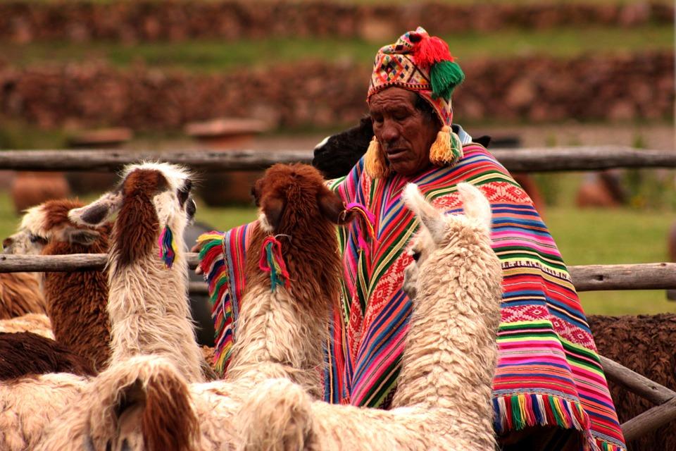 Peru llama pixabay