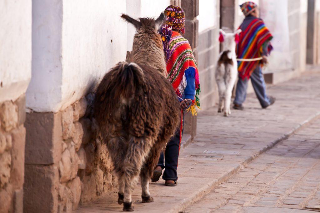 Cusco llama RW