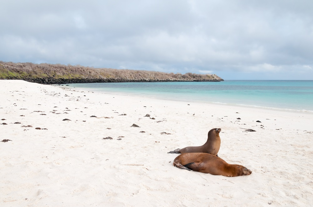 Land based Galapagos tours can explore Espanola