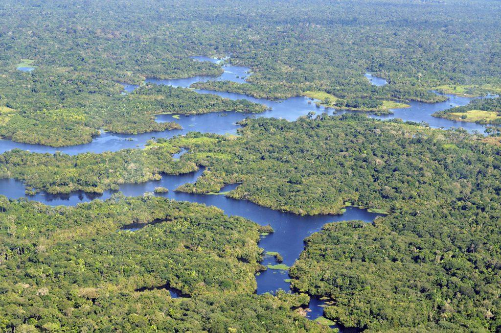 Amazon birds eye view (wiki)