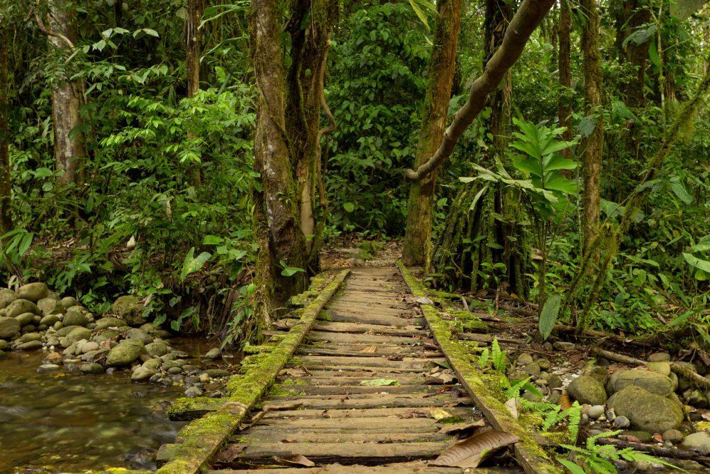 Amazon bridge RW
