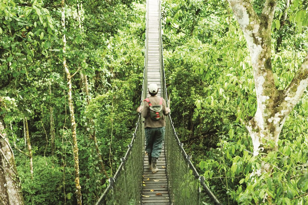 canopy walkway in the Amazon