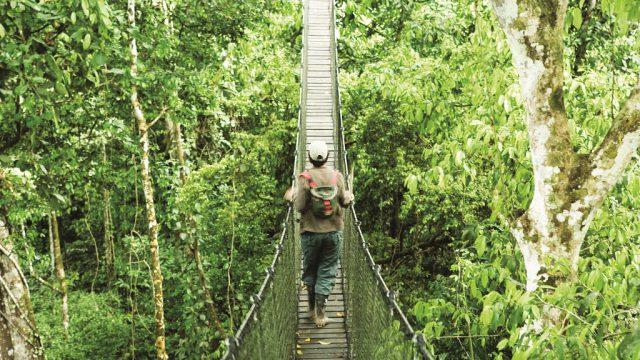 Amazon walkway RW