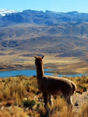 Family holidays to Peru